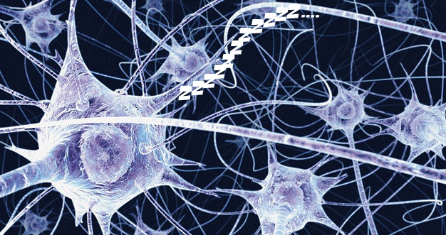 Are We Destined to Serve as the Planet's Brain Cells?